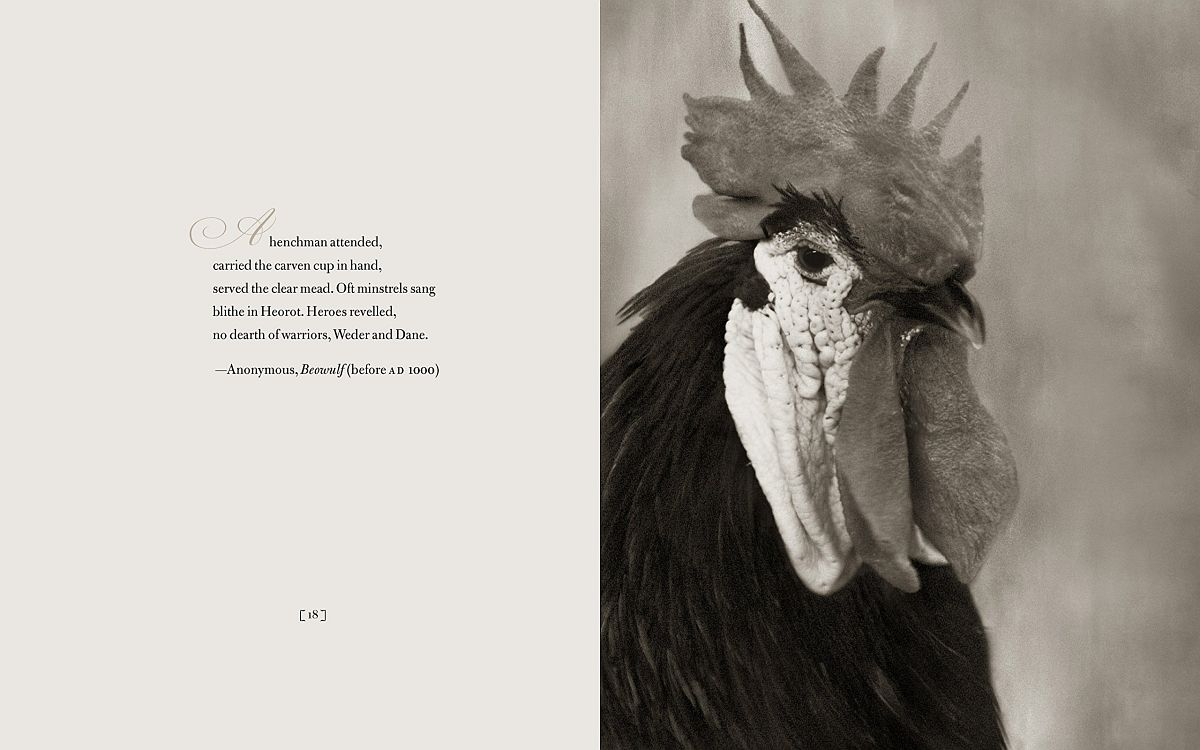 © Beth Moon: Literary Chickens