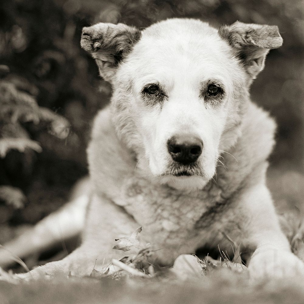Bumper, Mixed Breed Dog, Age 17, II 2015