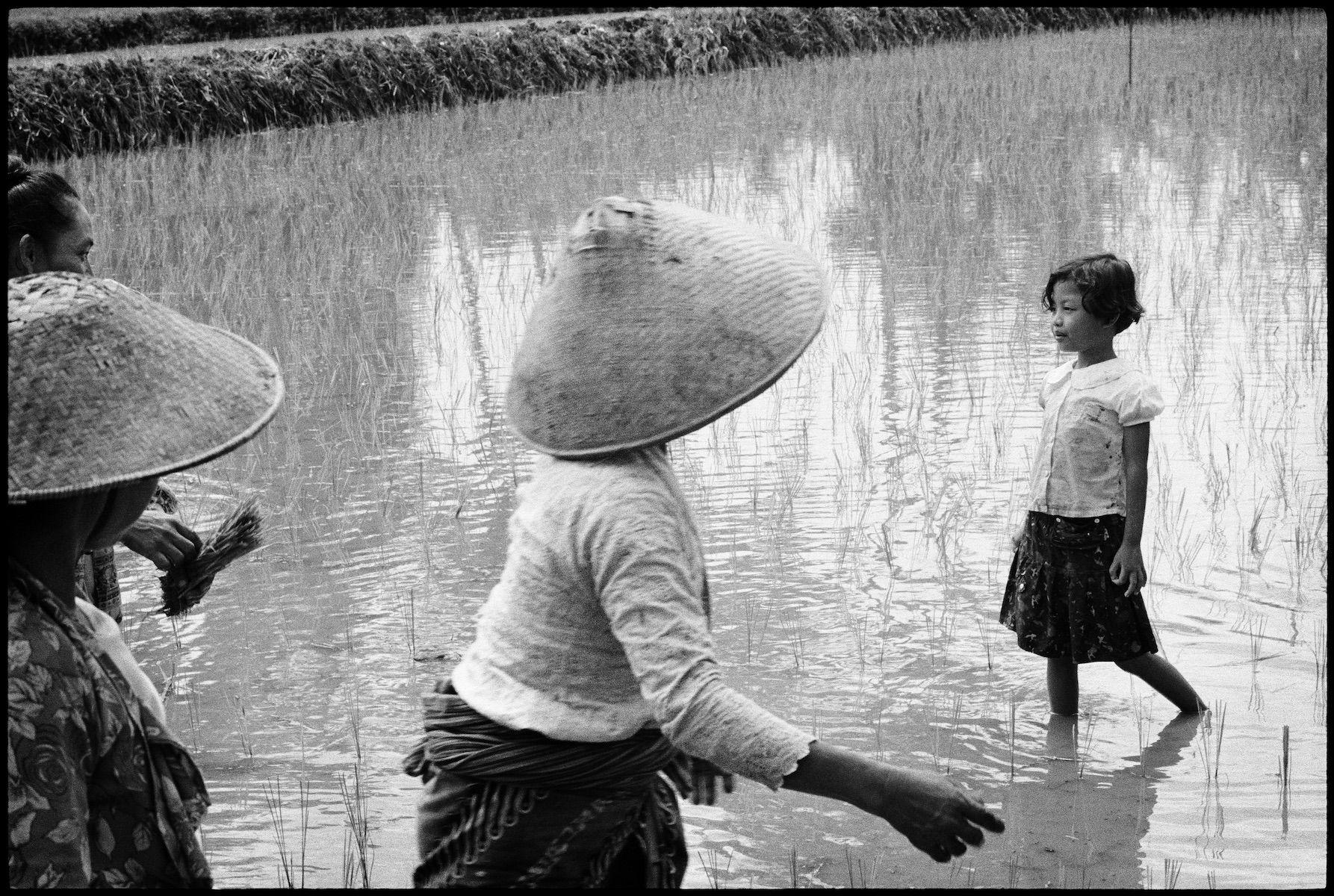 Untitled, Java, Indonesia 1995