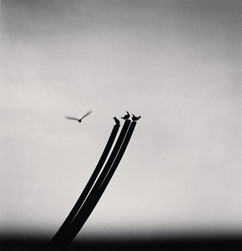 Michael Kenna,Four Birds, St. Nazaire, France, 2000.