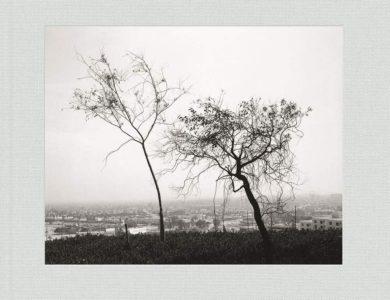 Robert Adams: Los Angeles Spring