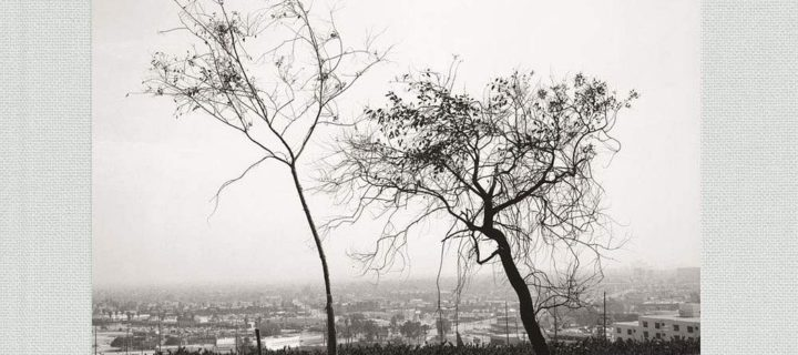 Robert Adams: Los Angeles Spring
