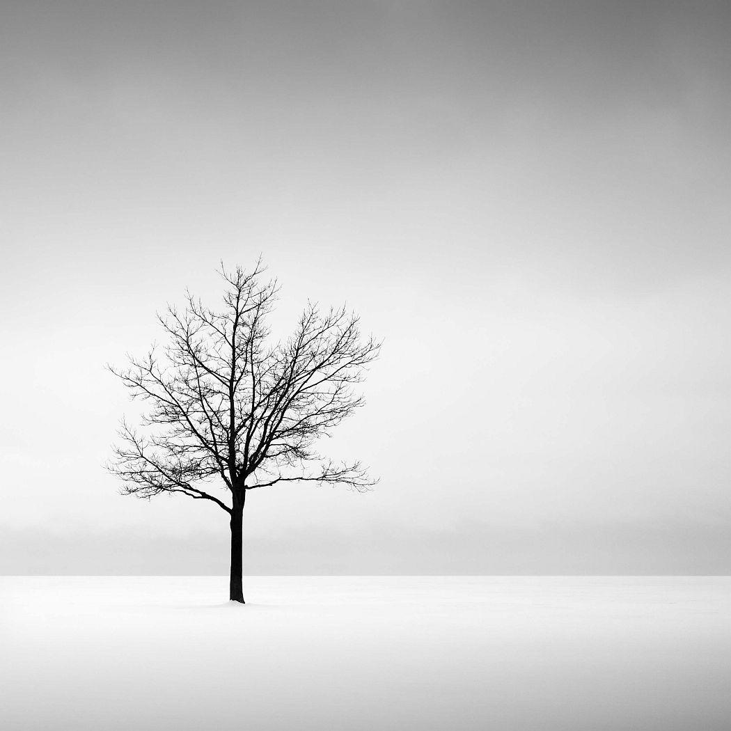 """Solitude: Metro Beach, Michigan, Lake St. Clair,"" 2010, Jeff Gaydash, American; carbon pigment print. Detroit Institute of Arts."