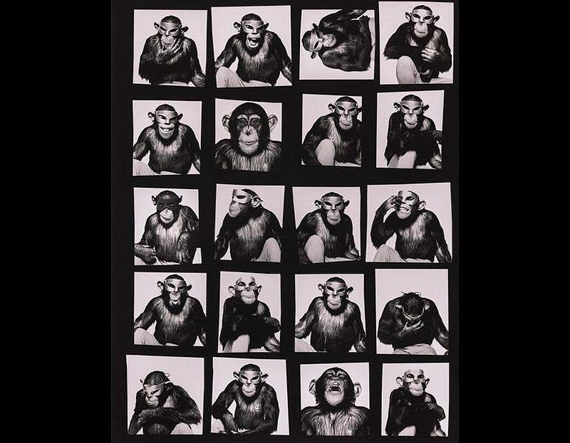 Monkeys with Masks, 1994. Albert Watson (British, b. 1942). Gelatin silver print; 50.3 x 40 cm. © Albert Watson. Image courtesy of the Cleveland Museum of Art