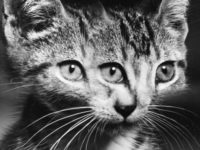 Vintage: Three Eyed Cats by Weegee