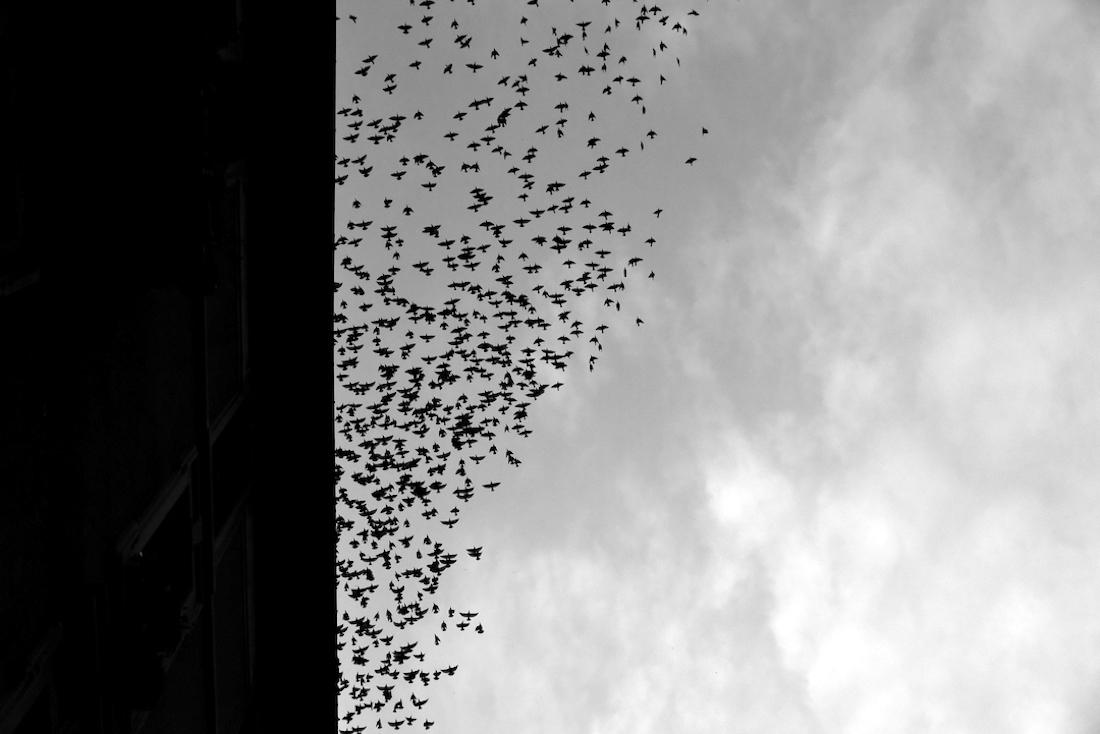 © Elisabetta Gatti: Migration / MonoVisions Photography Awards 2019 winner