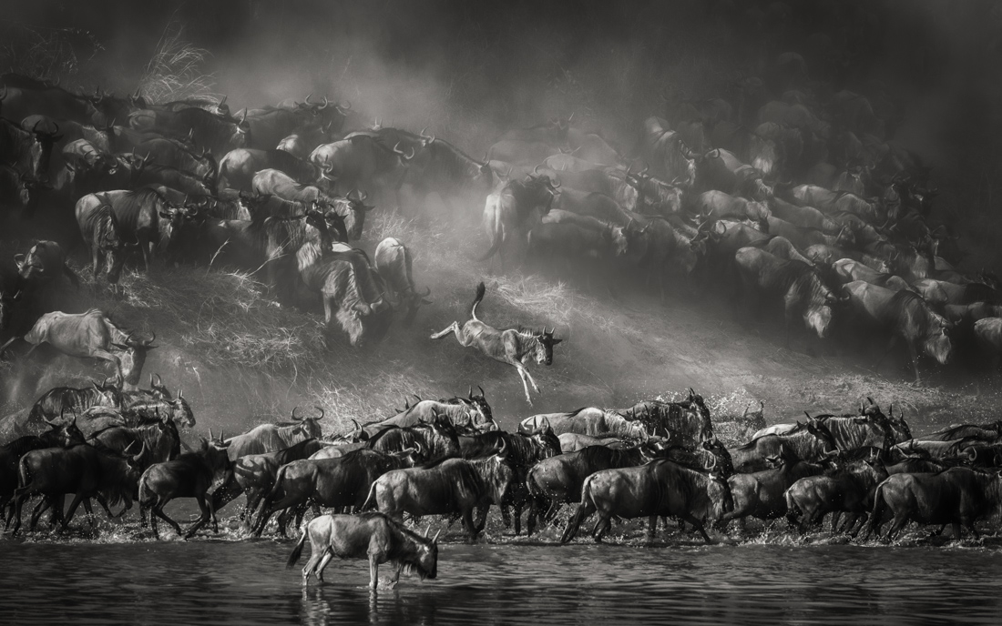Artur Stankiewicz - Great Spectacle of Nature - Mara River Crossing