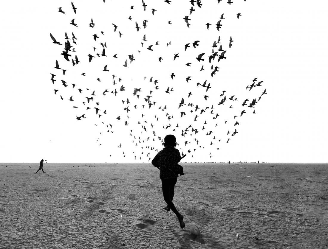 Dimpy Bhalotia - We Run, You Fly