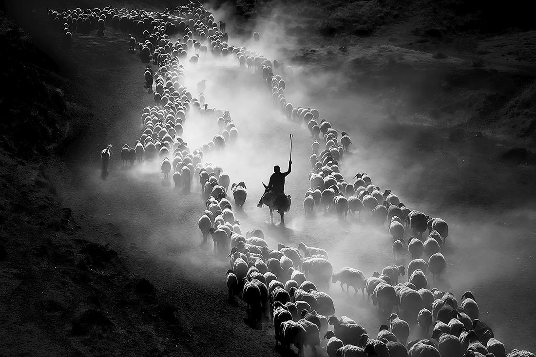 F.Dilek Uyar - Sheep Herds