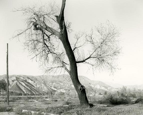 "MARK RUWEDEL ""Burnt Tree, Tujunga Wash #6, 2018"" Photograph; Gelatin silver print mounted on board Image size: 8 x 10 inch, board size: 16 x 20 inch © Mark Ruwedel / Courtesy Large Glass, London"