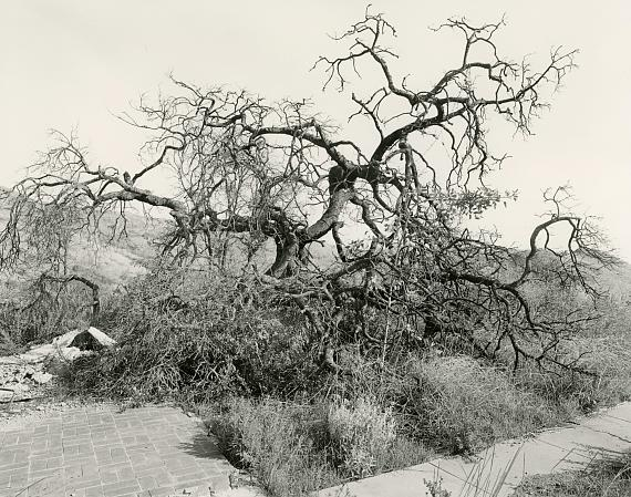 "MARK RUWEDEL ""Burnt Tree, Puerco Canyon #2, 2020"" Photograph; Gelatin silver print mounted on board Image size: 11 x 14 inch, board size: 20 x 24 inch © Mark Ruwedel / Courtesy Large Glass, London"
