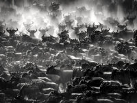 Artur Stankiewicz: Great Spectacle of Nature – Mara River Crossing