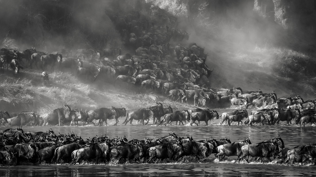 © Artur Stankiewicz: Great Spectacle of Nature - Mara River Crossing / MonoVisions Photography Awards 2020 winner