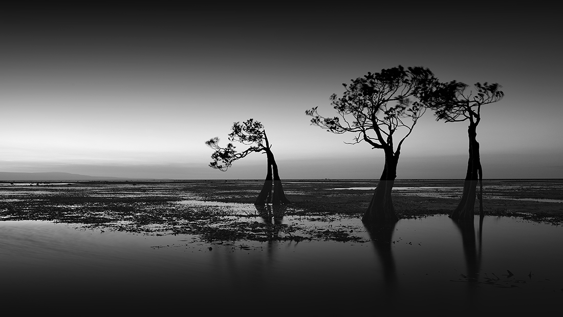 © Swee Sing Vincent Lim: Dancing Trees / MonoVisions Photography Awards 2020 winner