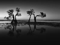 Swee Sing Vincent Lim: Dancing Trees
