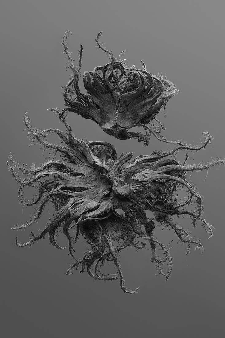 Katia Shtina - In collaboration with nature and randomness